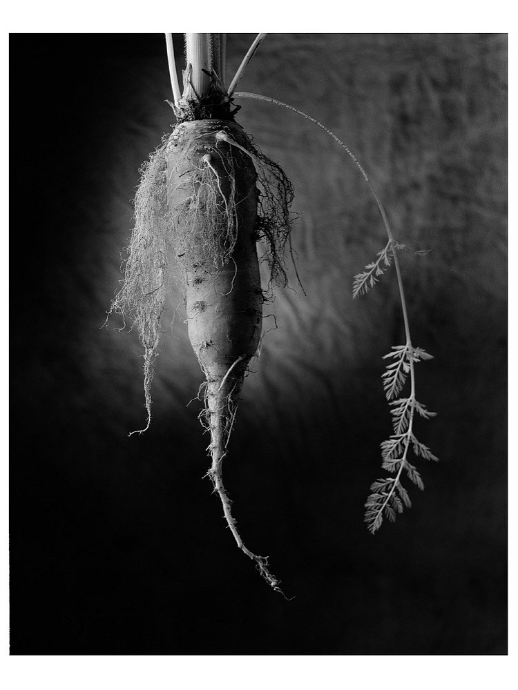 the carrot - from the series Vegetal